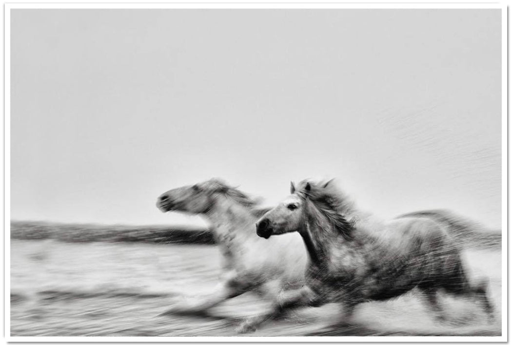 EXCLUSIVE BLACK AND WHITE PRINTS OF HORSES | GOALS