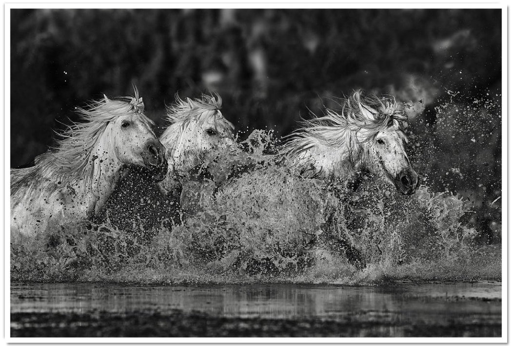 HORSE IMAGES IN BLACK AND WHITE | GLIDE