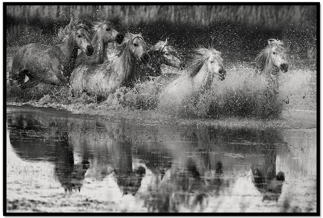 BLACK AND WHITE HORSE PHOTOGRAPHY | EXPECTATIONS