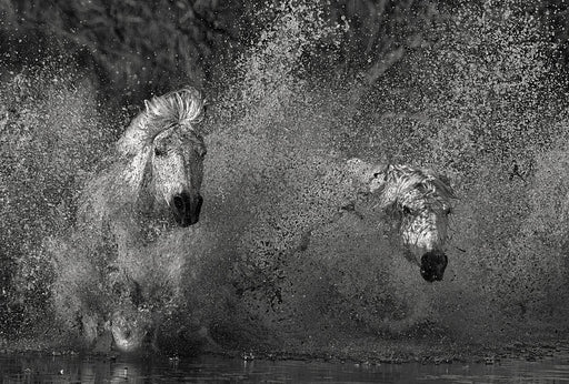 LARGE PHOTO ART PRINT OF HORSES RUNNING THROUGH WATER - EJAZ KHAN EARTH