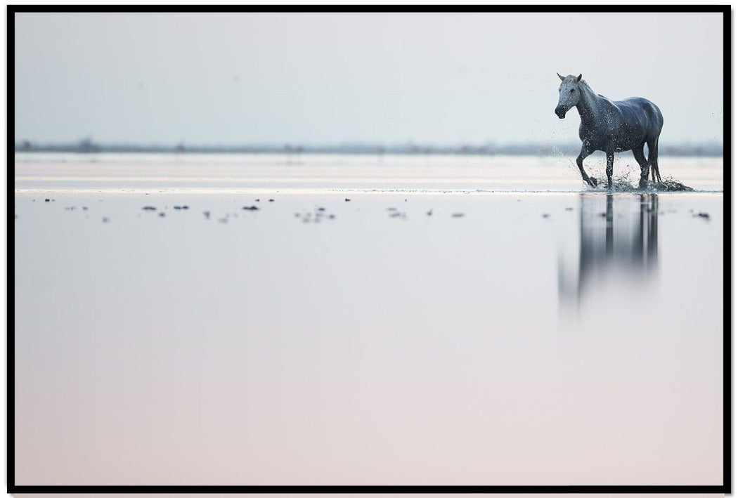 LONE SAILOR HORSE | TRAILING