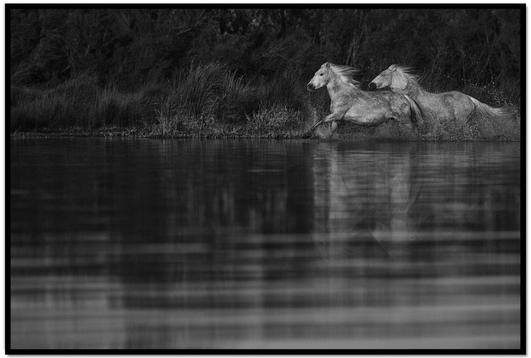 BLACK AND WHITE HORSE PHOTO | TRUST
