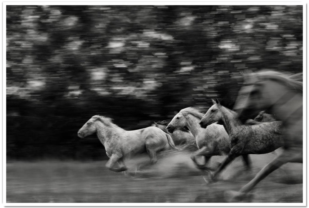 BEST HORSE PHOTOGRAPHY IN MOTION | TIMING