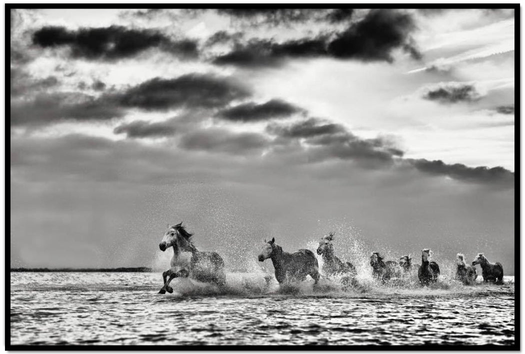 HORSE PHOTOGRAPHY IN BLACK AND WHITE | BELIEVE