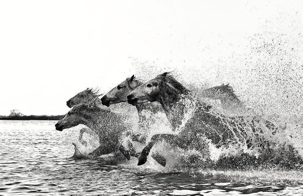Horses Racing in Water | Black and White Photo Prints | Ejaz Khan Earth