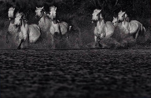 Beautiful Black and White Picture of Horses Running | NYC Art Galleries | Ejaz Khan Earth