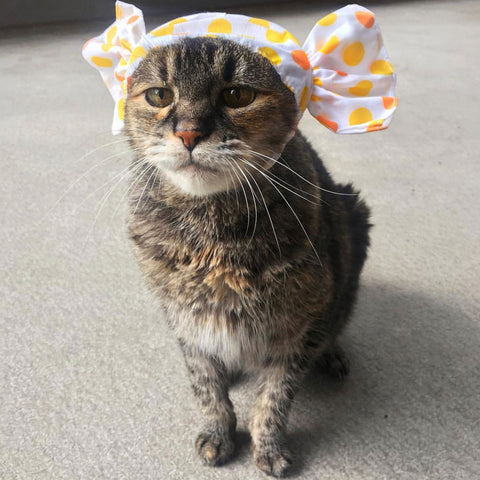 cat wearing candy hat