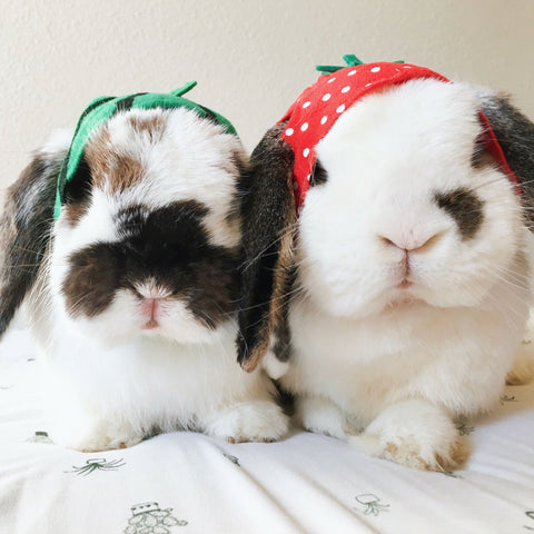 two rabbits wearing fruit hats
