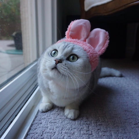 pink rabbit hat