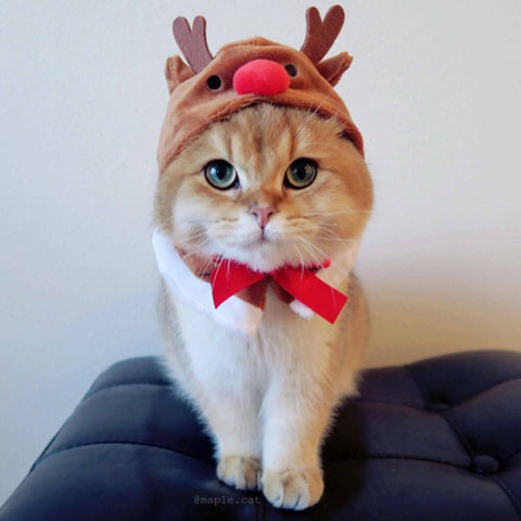 Christmas hat for cats