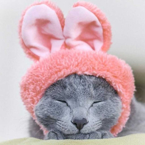 rabbit hat for cats