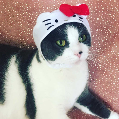 hello kitty hat for cats
