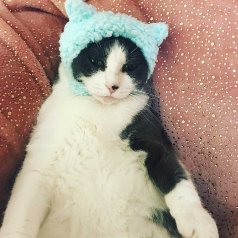 sheep hat for cats
