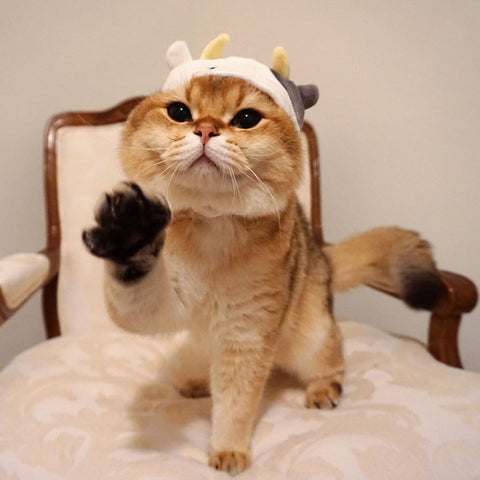 animal hat for cats
