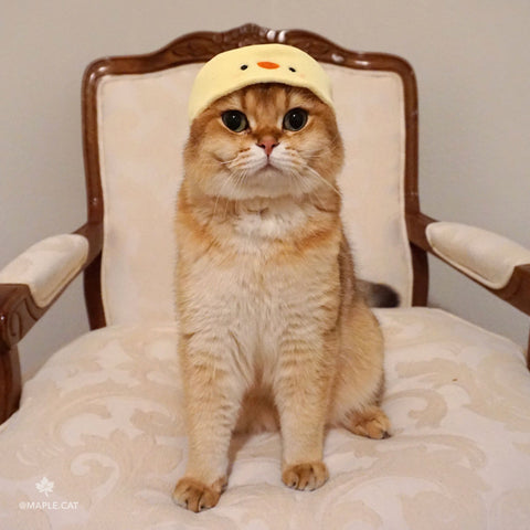 cute maple cat wearing animal hat for cats