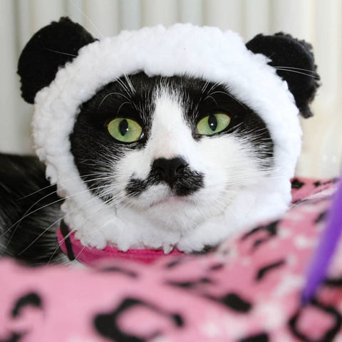 panda hat for cats