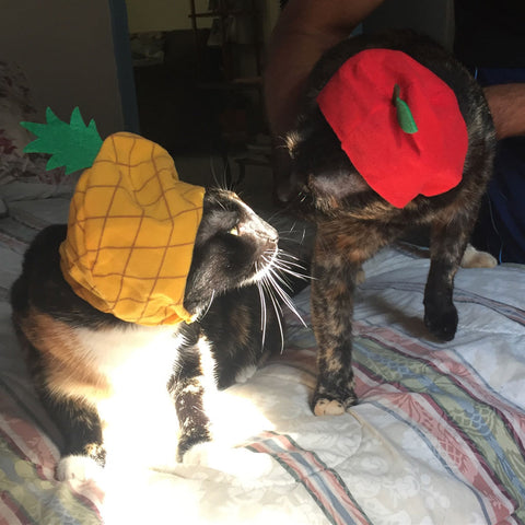 cat kisses with fruit hats