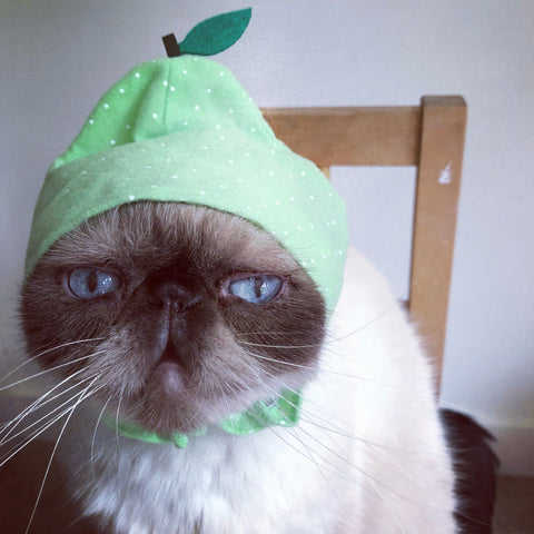 lovely cat wearing fruit hat
