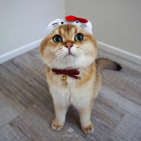 cute maple cat wearing hello kitty hat for cats