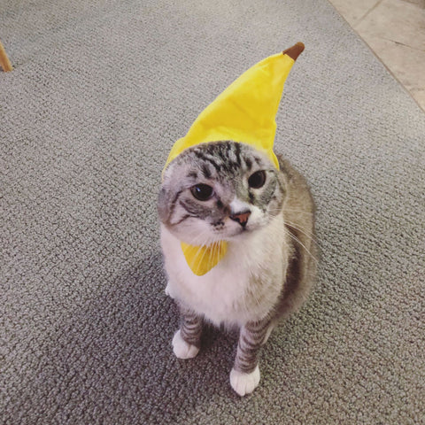 cat wearing banana hat