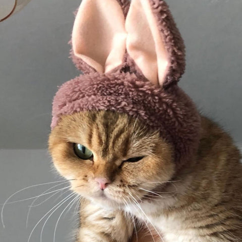 cat with bunny hat