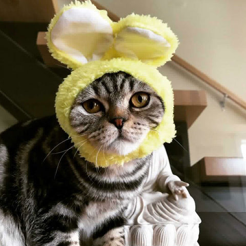 cat wearing bunny hat