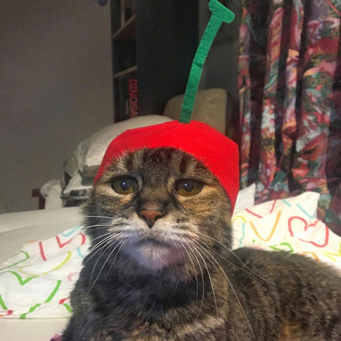 cat wearing fruit hat
