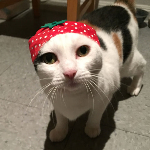 cat wearing strawberry hat