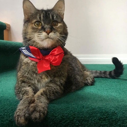 cat wearing sailor collar