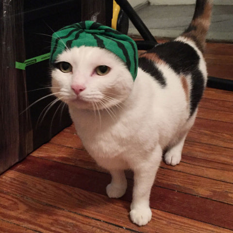a cat wearing watermelon hat