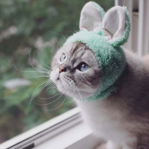 cat wearing rabbit hat