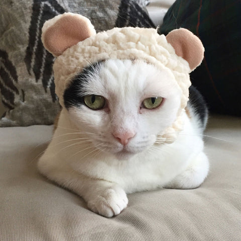 cat wearing bear hat
