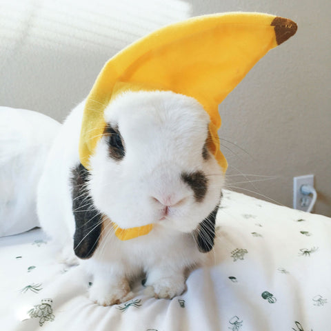 Rabbit Wearing Banana Hat