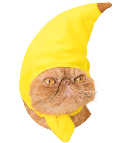 Fruit Hat for Cats (Kawaii kawaii Neko Fruit-chan) cat wearing fruit hat