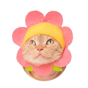 Flower Hat for Cats (Kawaii kawaii Neko Flower-chan)