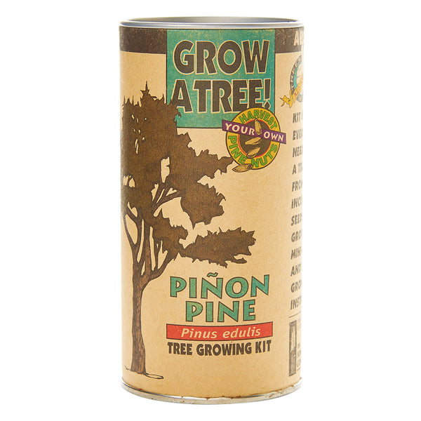 Pinon Tree Grow Kit