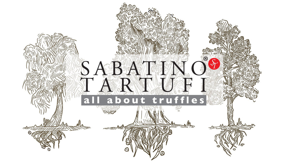 Types Of Fresh Truffles