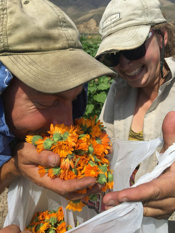 Smelling Calendula for Salve at Sweet Belly Farm