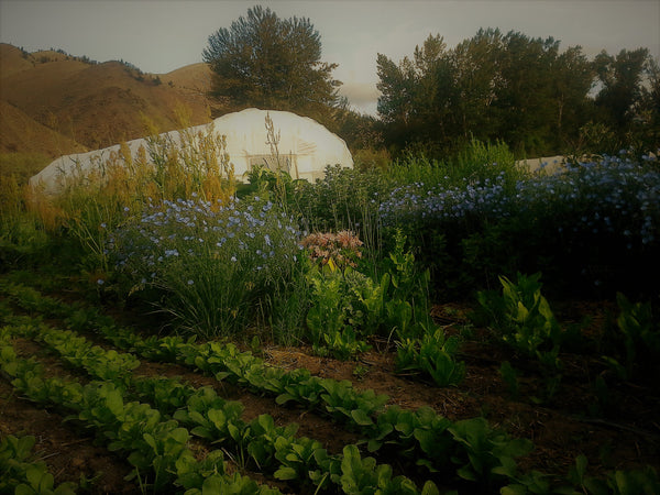 Sweet Belly Farm: a growing experiment in sustainability