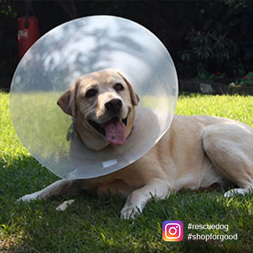"The ""Cone of Shame"" - A Guide to E-Collars"