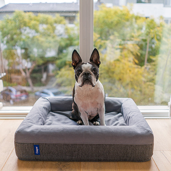 Dog Beds and Matts