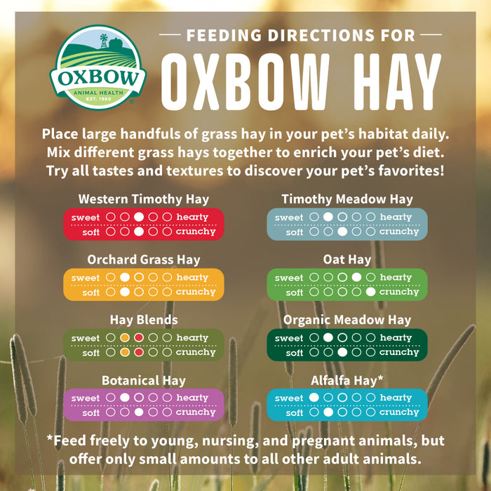 Oxbow Animal Health Western Timothy Hay All Natural Hay for Rabbits Guinea Pigs Chinchillas Hamsters & Gerbils