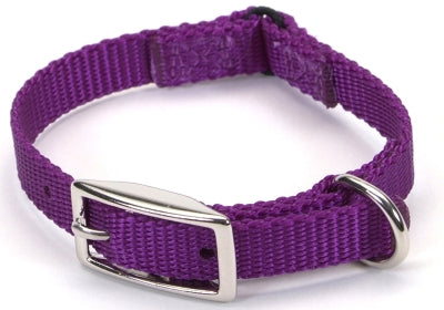 Boxer Rescue Collars or Leash