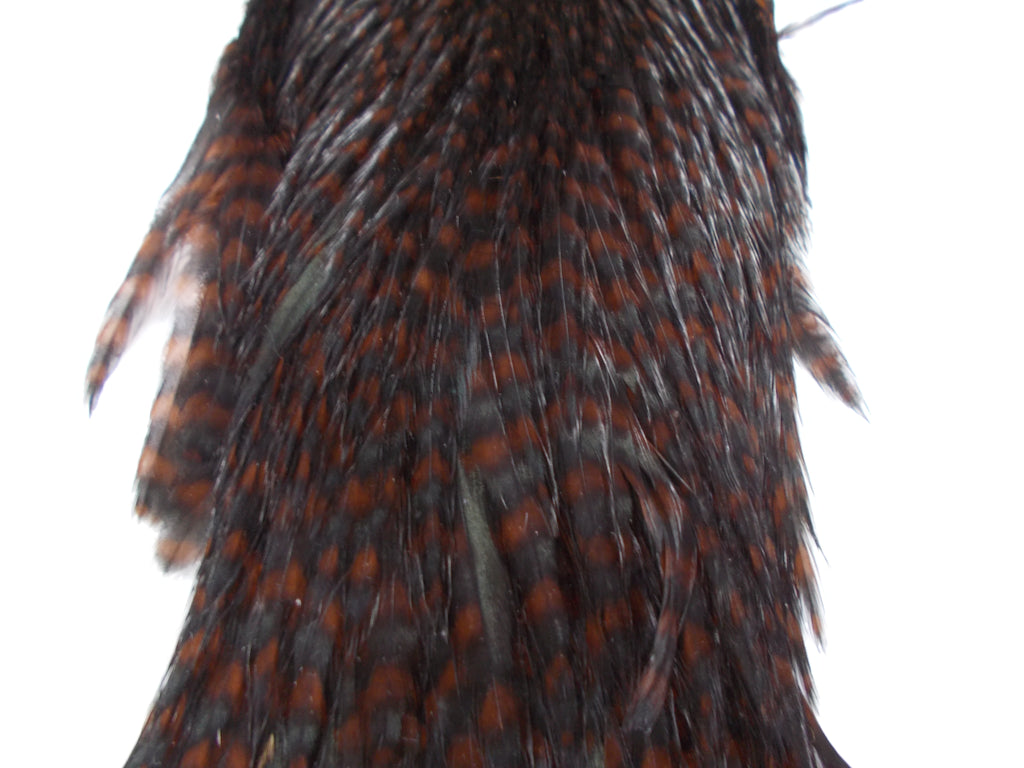 Whiting Hen Hackle Cape