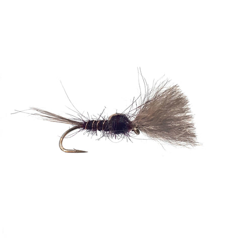 Clarret Possum Brush Flies Australia