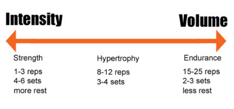 Strength vs  Hypertrophy Training | Platinum Nutrition