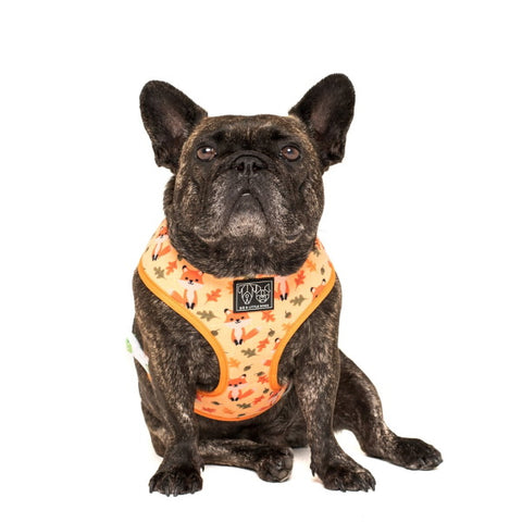 Image of Big & Little Dogs Feeling Foxy Reversible Harness