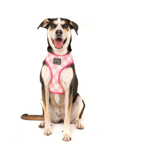 Big & Little Dogs Plant One On Me Reversible Harness