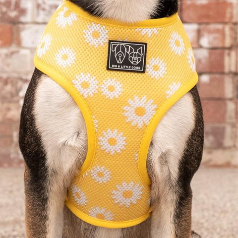 Big & Little Dogs Classic Print Harness: Oopsie Daisy-DoggyTopia