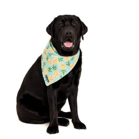 Big & Little Dogs Fine-apple Bandana-DoggyTopia